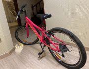 Продам   Велосипеди - Цiна: 1 500 грн. (торг)59 $50 €(за курсом НБУ) - Велосипеди на AVTO.KM.UA